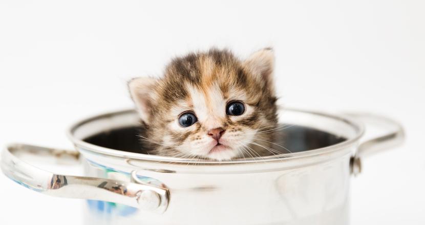 コロナ疲れ対策!猫が料理を作る動画「料理猫王Cooking Cat」がクリエイティブを通り越して癒される