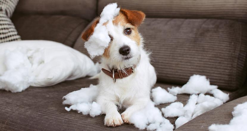 やらかしたペットたちがSNSで晒された結果!ペットが粗相した時の飼い主たちのストレスの捌け口が話題