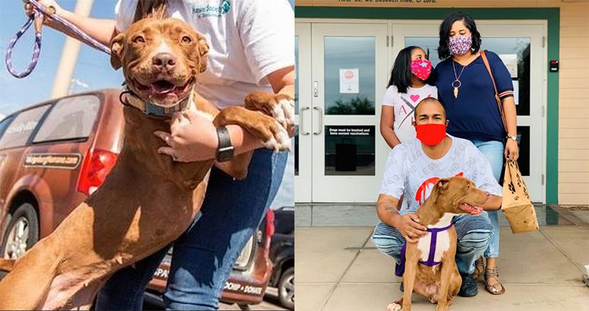400日間も里親が見つからず殺処分の危機に瀕していた犬、ついに飼い主と巡り会い笑顔で応える
