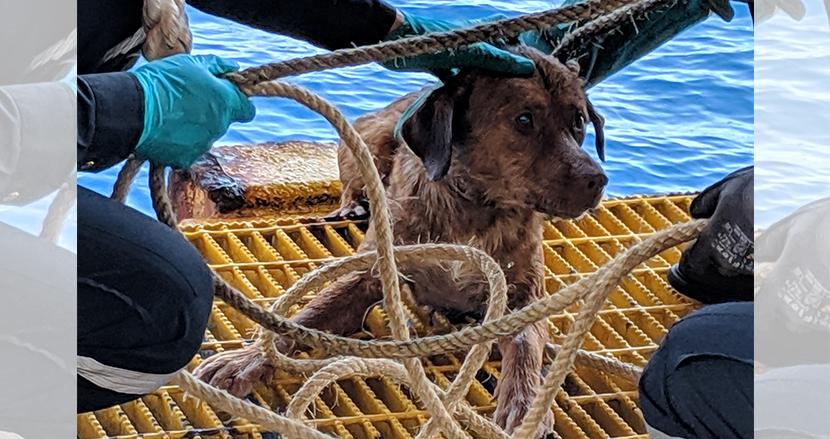 タイの沖合220kmを泳いでいた犬、奇跡の救出劇。救助したスタッフが里親に名乗り出る