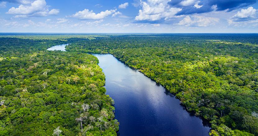 アマゾンの熱帯雨林は現在、吸収量より多くの二酸化炭素を排出している。ブラジル研究チームが発表