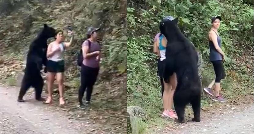 突然クロクマに遭遇した女性グループの冷静すぎる行動が話題!スマホで自撮りをする余裕っぷり