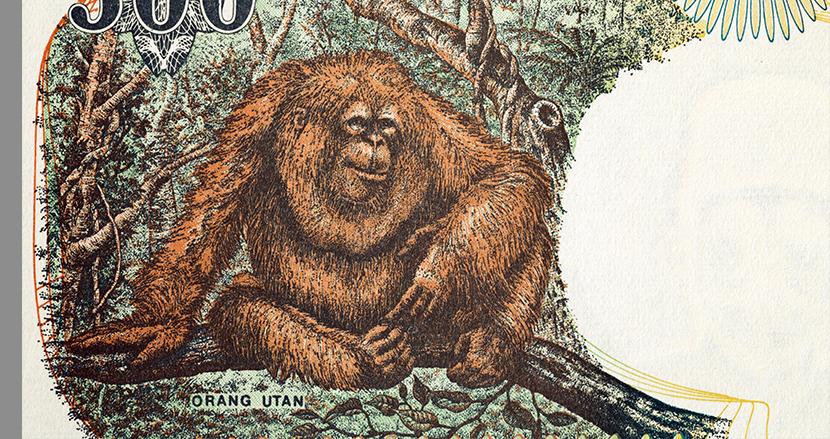 インドネシアの旧札にオラウータン! 海外紙幣の肖像画に動物たちが採用されまくっている