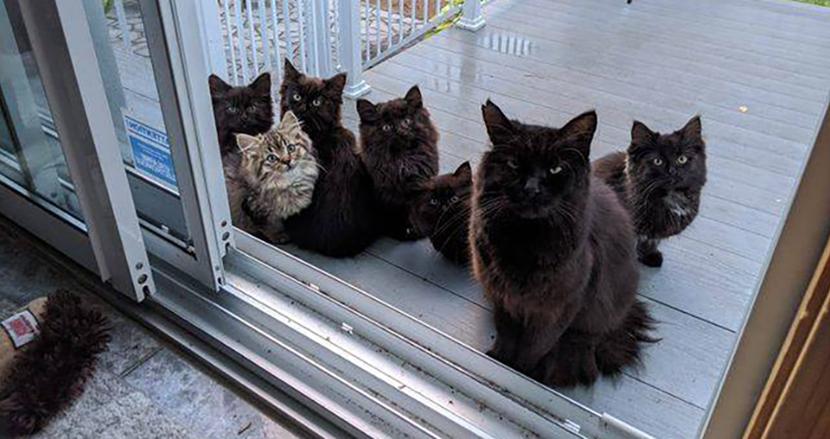 みんな連れてきちゃいました!黒猫が子猫たちを連れて、餌をくれた女性に挨拶に来た件