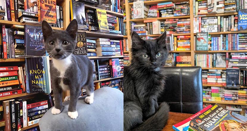 キュートな猫が店内を自由に歩き回るブックカフェが話題に。お気に入りの子をペットとして引き取ることも