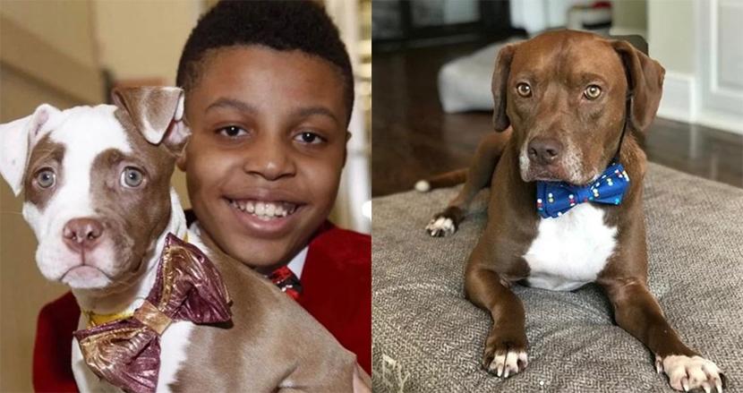 里親を探す保護施設の犬猫に、手作りの蝶ネクタイを寄付。12歳の男の子の取り組みに称賛の声