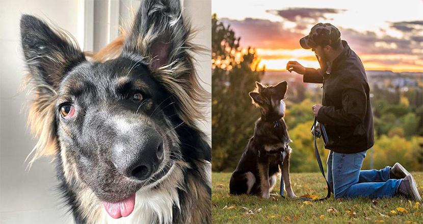 生後まもなく母犬に襲われ、顔が歪んだ犬。素敵なカップルに引き取られ、一躍SNSの人気者に