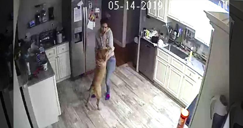 出張中に自宅から「侵入者」の通知。防犯カメラを覗いたら、恋人と愛犬がダンスパーティーを開いていた