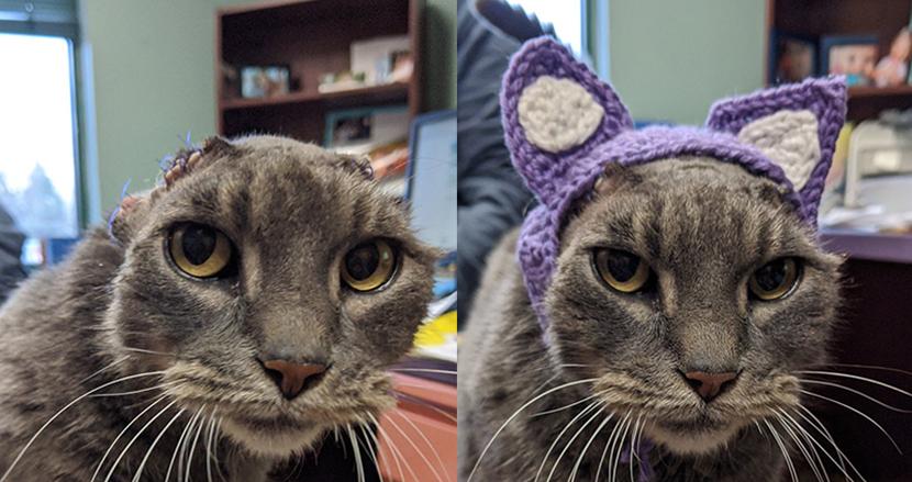 耳を失った野良猫に毛糸で編んだ耳をプレゼント!施設職員の愛ある行動で生まれ変わった姿に称賛の声