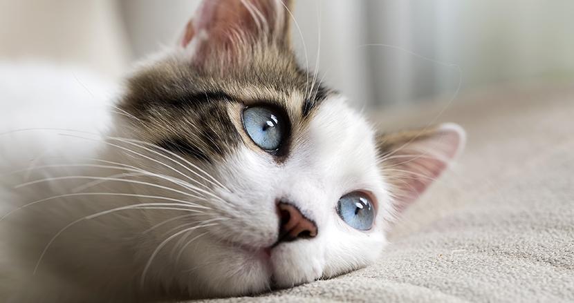 猫は「自分の名前」を聞き分けられる? 上智大学の研究チームが実際にテストしてみた