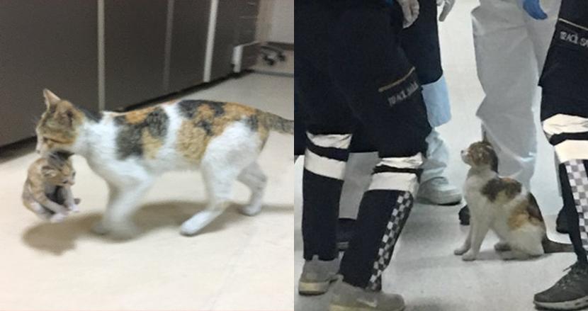 「うちの子、診てもらえる?」子猫をくわえて救急救命室を訪れた母猫に思わずほっこり