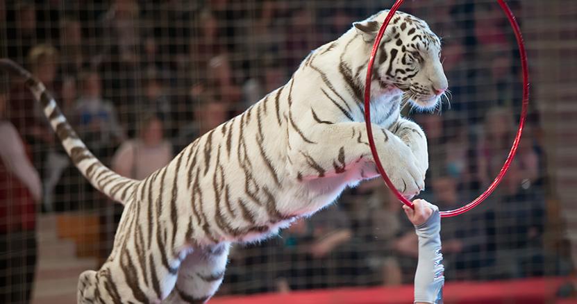 野生動物のサーカス出演が禁止へ、イギリスが法案発表。世界40カ国以上に広がる動物を守る動き