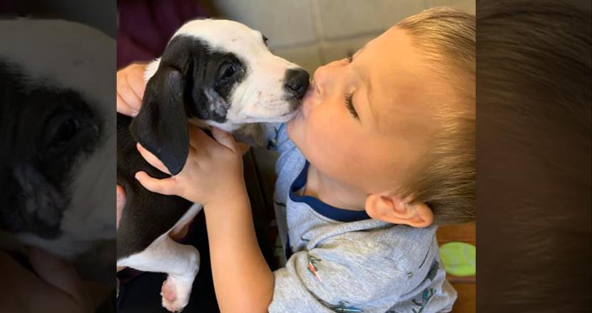 口唇裂を持つ2歳の男の子、同じ病気の子犬が運命の出会い!2人の絆に祝福の声、続々