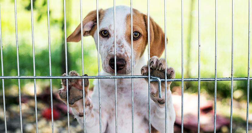 ふるさと納税で犬の殺処分ゼロを達成! 名古屋市の取り組みが話題に。「ガス室」も撤去方針