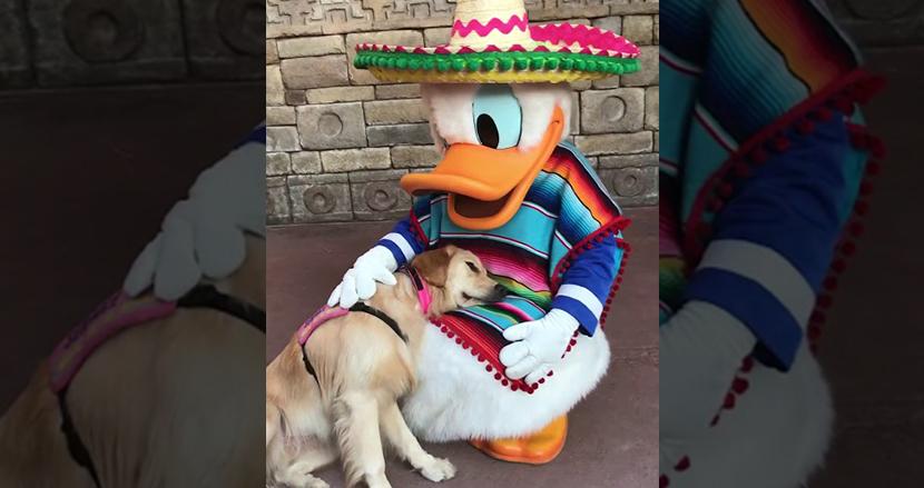 ディズニーが大好きな介助犬。ドナルドダックと寄り添う姿が、世界を笑顔で包む