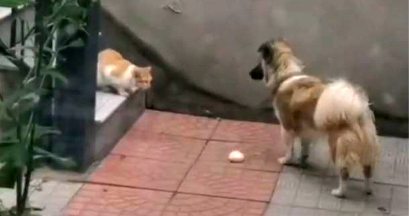 お腹を空かせた野良猫に肉まんを分け与える愛犬。種族を超えた優しさに思わずほっこり