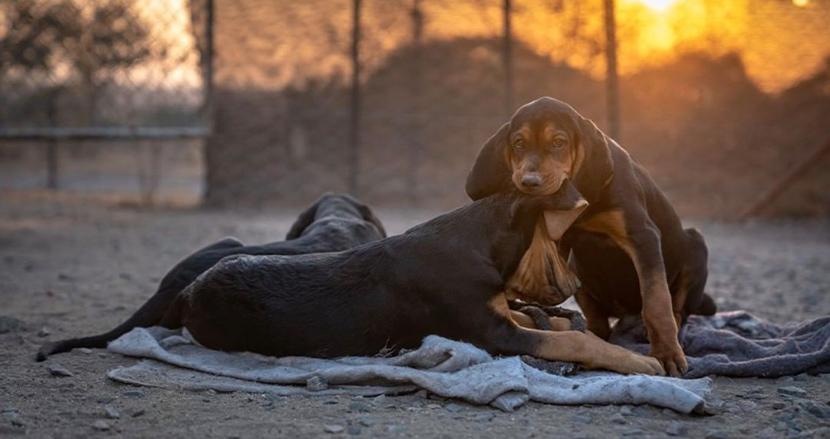 密猟者から野生生物を守る救世主は犬のチーム!絶滅危機の南アフリカのサイを45頭保護