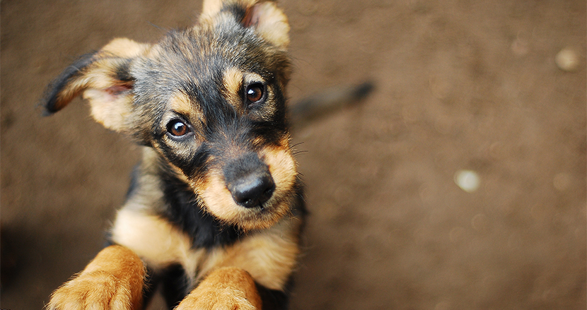 スマホが使えなくなるなら愛犬を手放す人が4割!スマホのために犠牲にできること調査結果が衝撃的