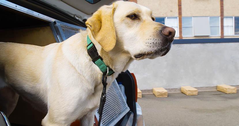 新型コロナ感染探知犬、人間のおしっこから96%の精度で陽性者を識別。米大学研究チームが発表
