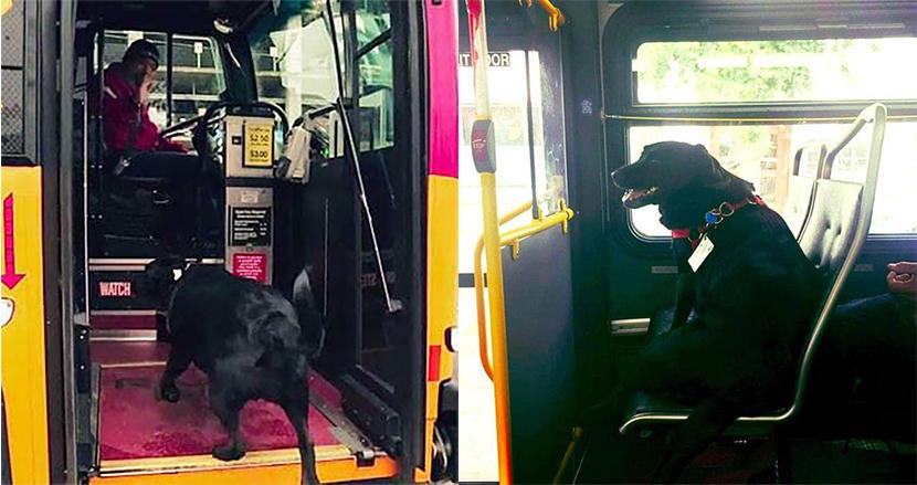 毎日一人でバスに乗車し、ドッグパークに通うミックス犬が大人気に!座席に座る愛らしい姿にほっこり