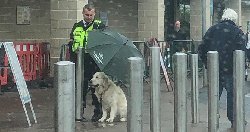 土砂降りの中、スーパーの外で飼い主を待つゴールデンレトリバーに、そっと傘を差し出した警備員に称賛の嵐