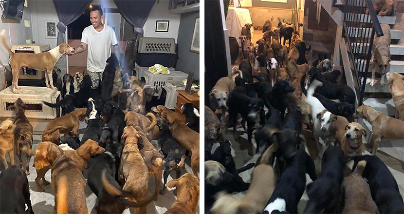 大型ハリケーン直撃で施設の犬小屋がピンチ!300匹の犬を自宅で保護した男性に称賛の嵐