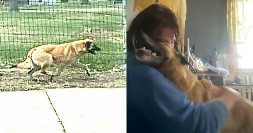 心の病を抱えていた犬が97日間放浪し、65キロ離れた街に住む大好きな里親に会いに行った話