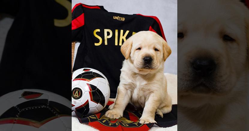 プロサッカーチームに可愛い子犬が加入!? 介助犬見習いがアトランタ・ユナイテッドFCの新メンバーに抜擢