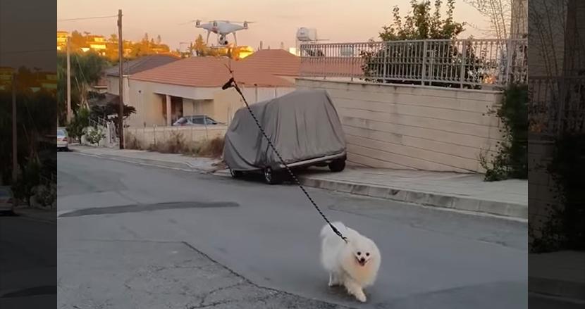 ドローンで犬の散歩をする光景が話題に!新型コロナ対策で外出禁止になった街で生まれた逆転のアイデア