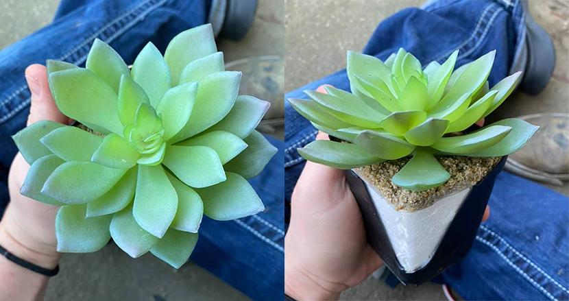 2年間も観葉植物に水をあげ続けた女性、プラスチック製の造花だったことに気付く