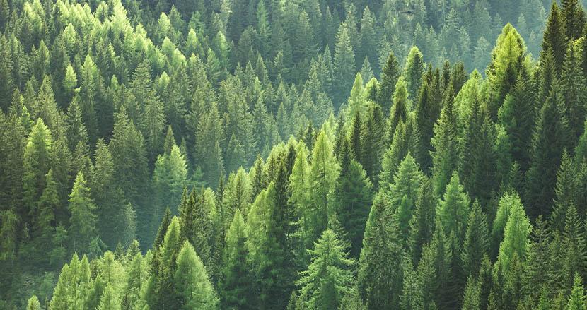 2000年以降、地球上で再生した森林の広さはフランスに匹敵。新研究で明らかになった希望