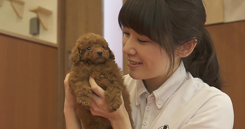ペットたちを遺伝子病から守れ!重篤な遺伝子病の発症リスクのない犬猫の販売が開始