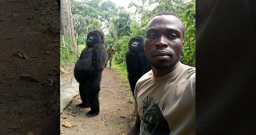 まるで人間! 密猟者に睨みを利かせるゴリラと国立公園職員の自撮りが世界中で大人気に