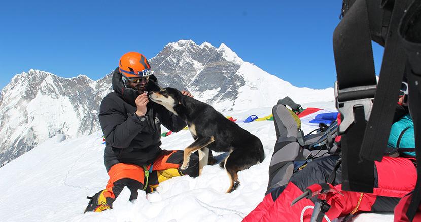 登山隊について来た野良犬、そのままヒマラヤ登頂に成功する。人と犬との深い絆に感動