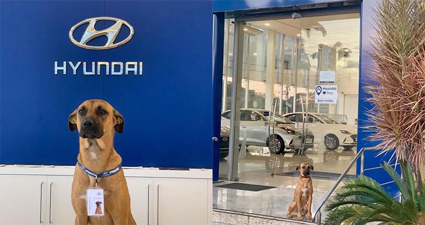 ヒュンダイの店舗に現れた野良犬、正式採用され接客に大忙し!社員証を下げた姿がSNSで人気に