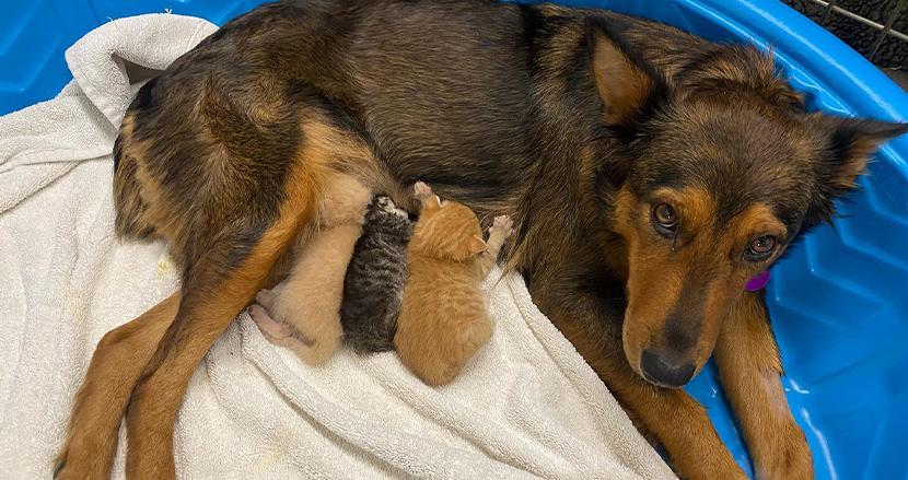 子どもを失い憔悴していた母犬、身寄りのない3匹の子猫と出会って…。種を超えた親子の絆にほっこり
