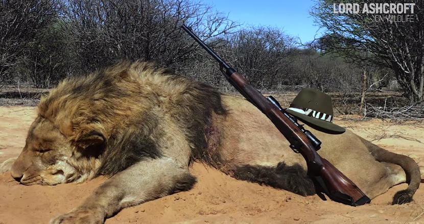 南アフリカで1万2000頭のライオンが、観光客の射撃目的で飼育。潜入捜査のイギリス人が衝撃告白