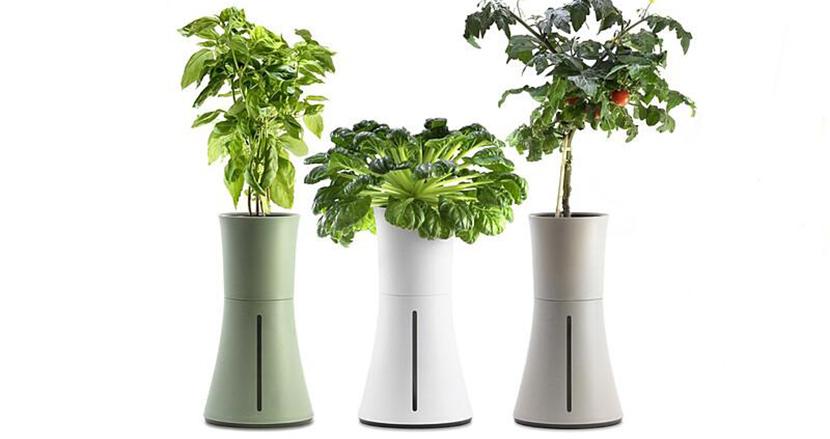 家庭菜園を失敗させないガジェット「BOTANIUM」。土も日光も必要ないってどういうこと?