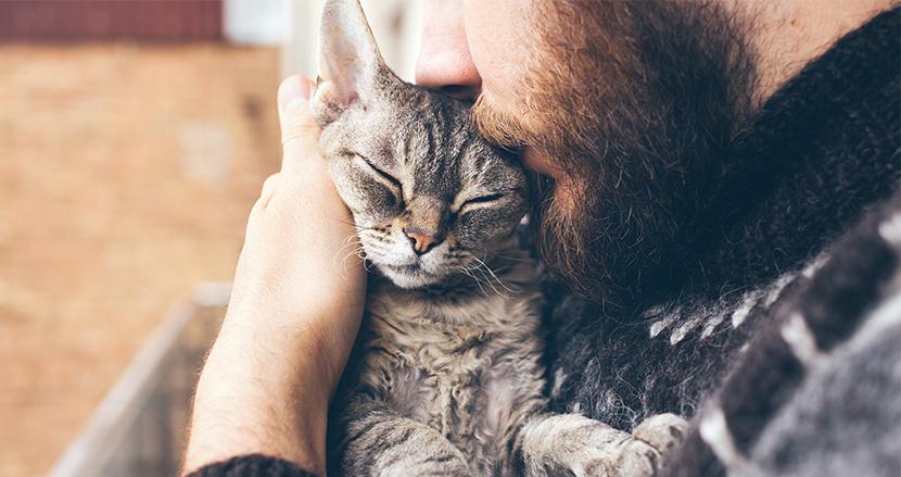 愛猫家に朗報!猫も犬と同じように、飼い主に対して強い愛情を抱いていることが科学的に証明される