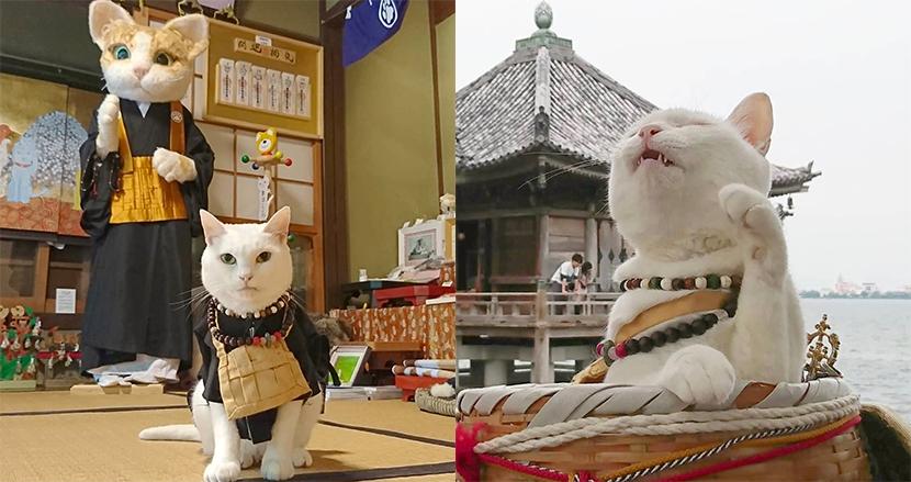 ニャンとも癒やされる!猫が住職を務める京都の「猫猫寺」が、世界中の愛猫家の間で話題騒然