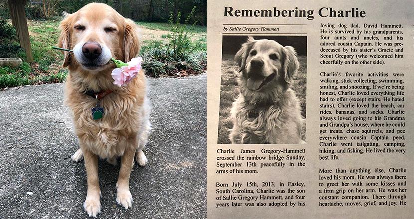 亡くなったゴールデン・レトリーバーを想い、飼い主が「追悼記事」を制作。SNSで世界中が哀悼の意