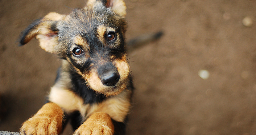 外出自粛で孤独なあなたに。動物保護施設が提案する「今こそペットの里親になるべき理由」