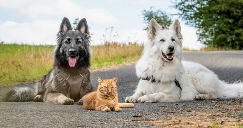 瀕死の状態で救われた子猫。大きな犬2匹と仲睦まじく暮らす内、今では自分が犬だと勘違い