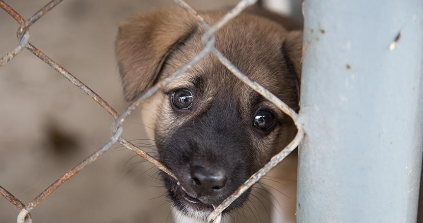 動物をモノのように扱い捨てる悪質ペット業者が野放しに…… 動物愛護法改正に向けた訴えがSNSで拡散中