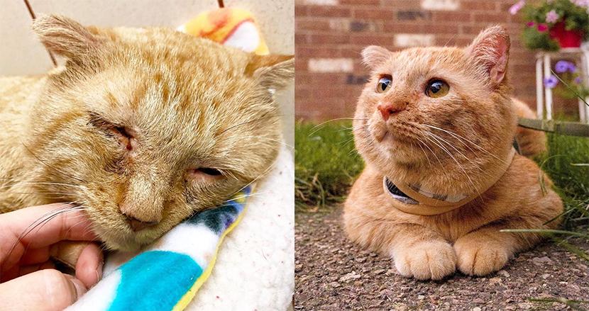 悲しすぎる表情だった野良猫、優しい飼い主と巡り合って一変!幸せそうな姿がSNSで話題に