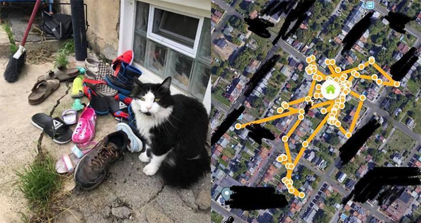 夜な夜な現れる靴泥棒の正体は? 驚くべき夜活で一躍人気者になった猫