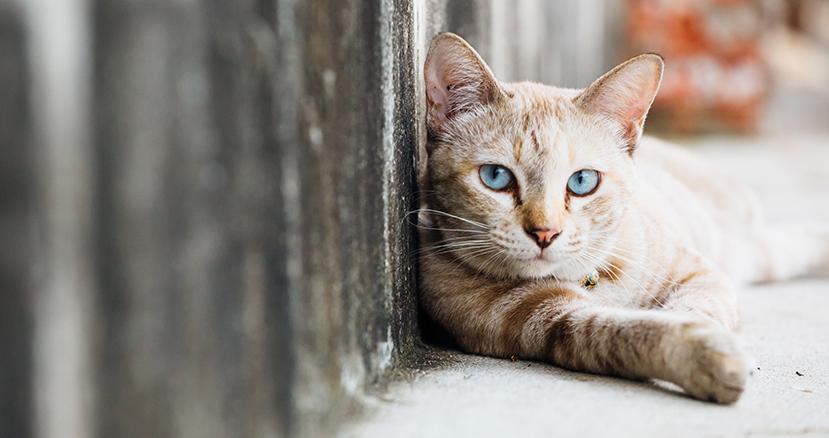 オーストラリア政府、毒入りソーセージを飛行機から撒き、野良猫200万匹を駆除へ