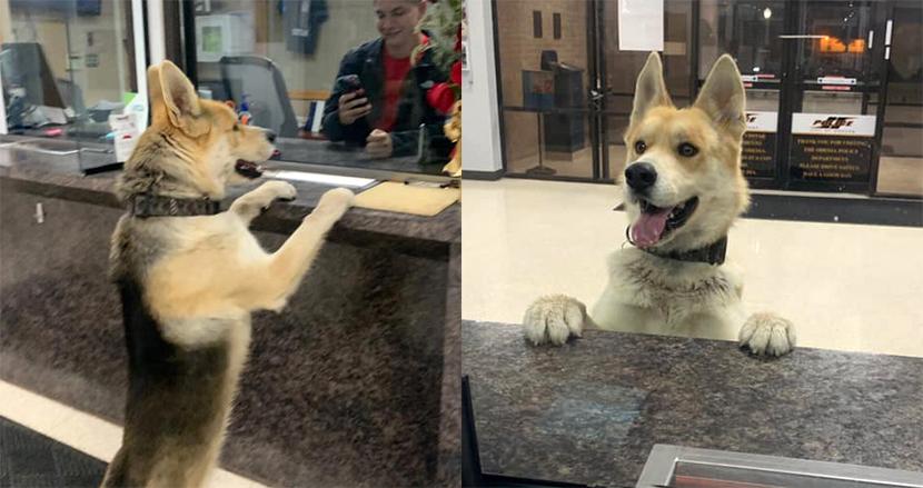 「飼い主が見当たらないのですが」自ら警察署に報告しにきた迷子犬。予想外の訪問者に職員も大歓迎