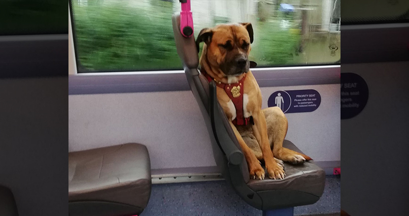 ハーネスを付けた犬がご主人を探すべく、一匹でバスに乗車。不安な表情に胸が締め付けられる