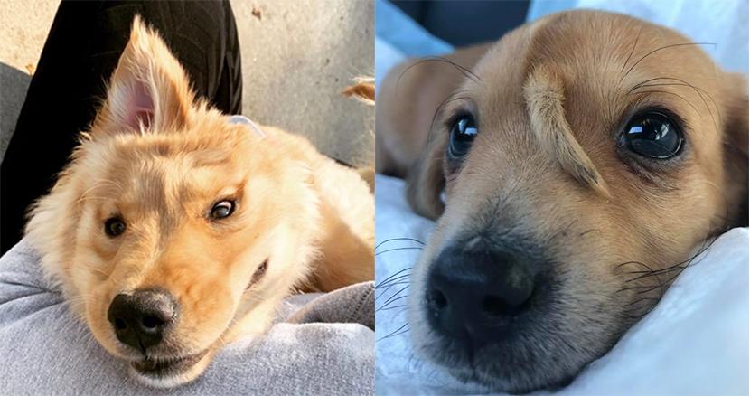額から角が生えた「ユニコーン犬」が反則級の可愛さ!ユニークな見た目にSNS上で悶絶者続出中
